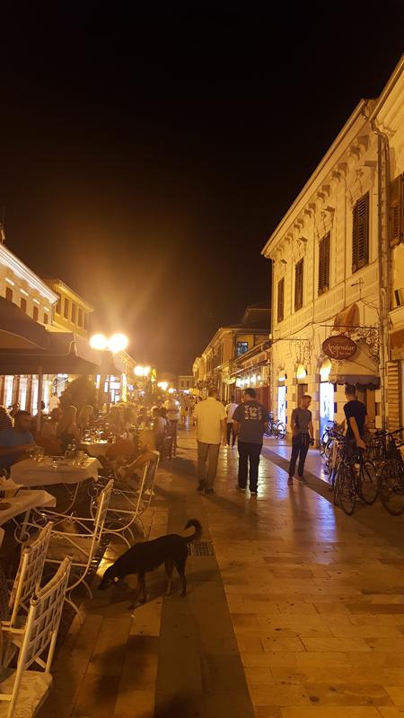 Vaiggiare in Albania con il cane | Scutari viale centrale con cane randagio