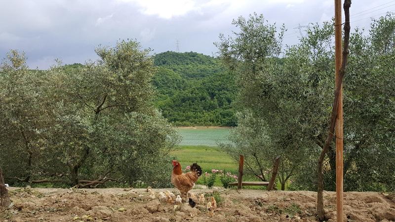 Campeggi in Albania, camping in albania Camping tirana