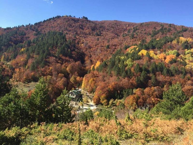 Autunno in Albania, foliage, Dardha
