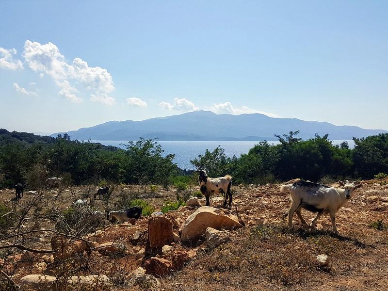Vado in Albania, panorama con capre e mare