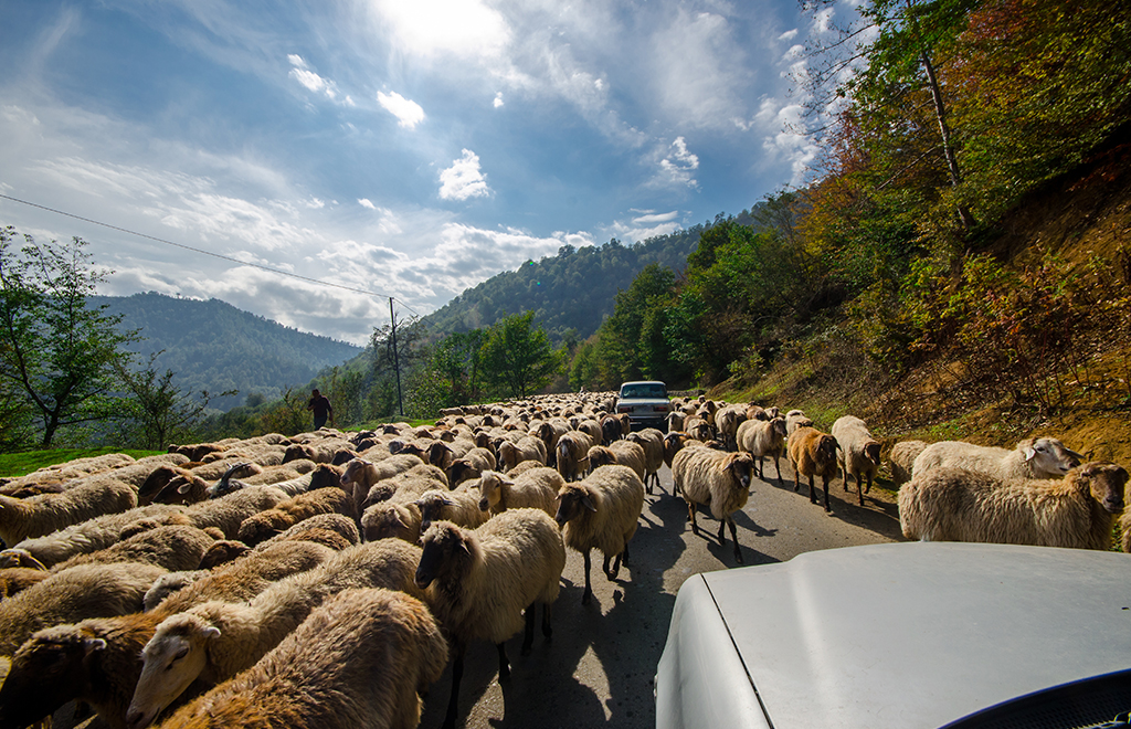 Fly and Drive albania